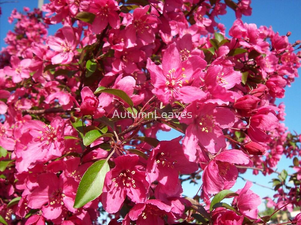 Cherries Jubilee by AutumnLeaves