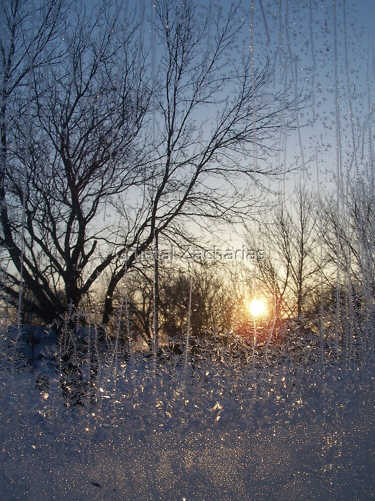 Frosted Sunrise by Crystal Zacharias