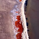 Natures' art in abstract. by Michelle Dry