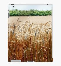 Yellow field of ripe wheat closeup iPad Case/Skin