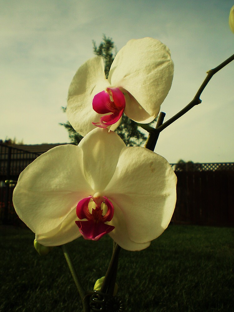 Back Yard Orchid by Jeff Brewster