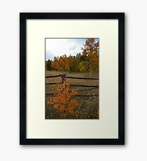 Autunm Alone Framed Print