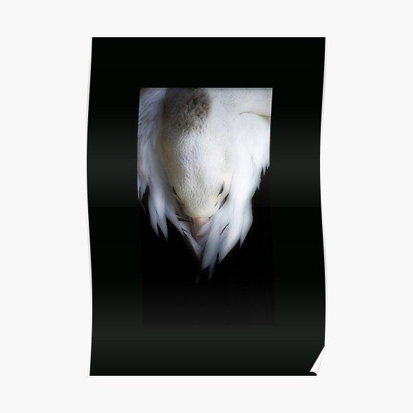 Pelican Dreaming Poster