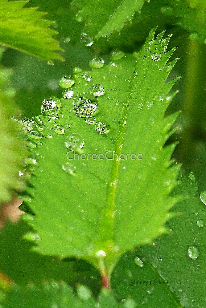 Green Droplets by ChereeCheree