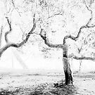 Dancing trees  by Alessandra Antonini