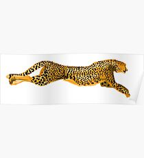Running Leopard Cheetah Cat Poster