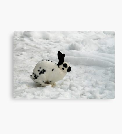 Rabbit in the snow Canvas Print