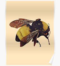 Tyler Scum Fuck Bee Poster