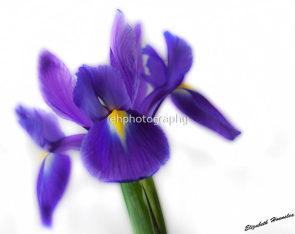 Blue Iris by 0odles