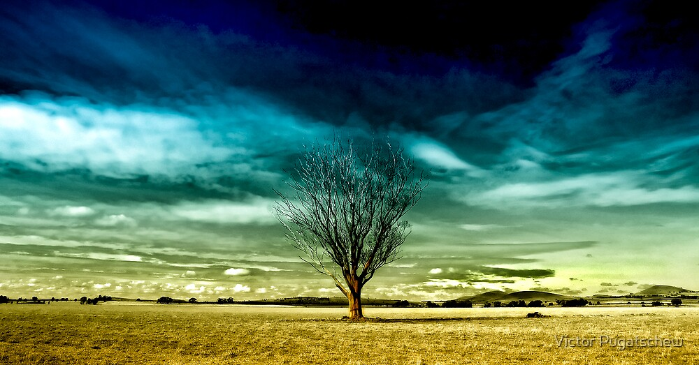 Lonely tree. by Victor Pugatschew