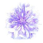Cornflower considered by Jax Blunt