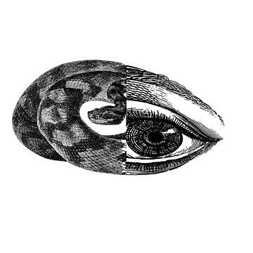 Snake Eye by In-Situ