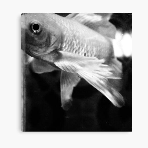 Fish Study Canvas Print