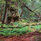 Enchanted Forest - Cradle Mountian, Tasmania by Darren Post
