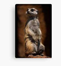 Looking Out For The Clan Canvas Print