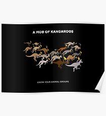 A Mob of Kangaroos Poster
