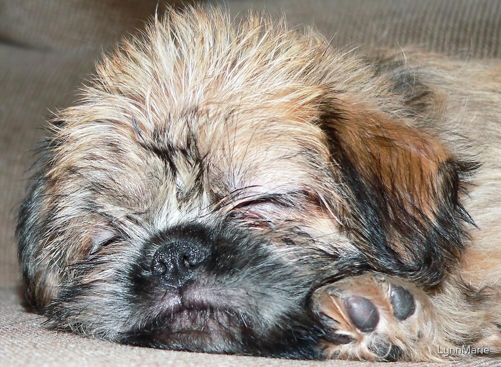 Shiffon Puppy by LynnMarie