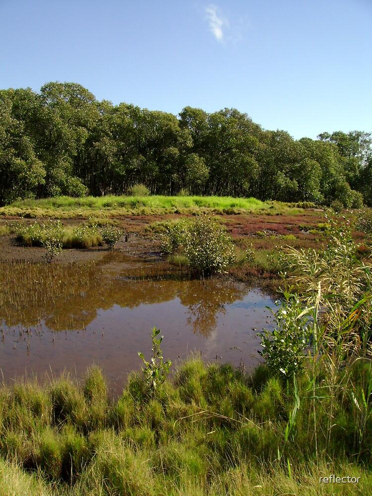 Salt Marsh by reflector