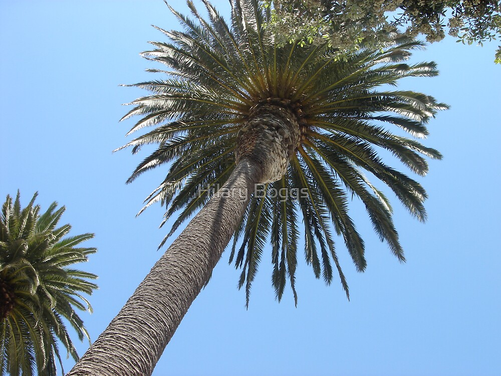 Califonia Palm Tree by Hilary Boggs