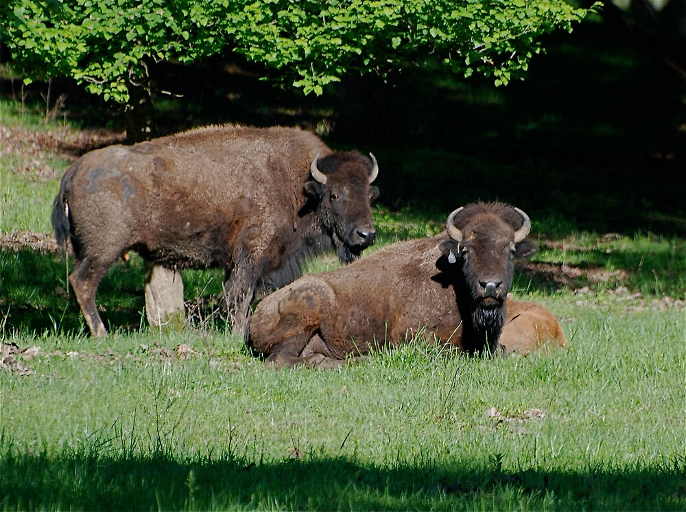 Family Portrait by Jim Caldwell