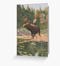 Vintage Moose Illustration (1902) Greeting Card