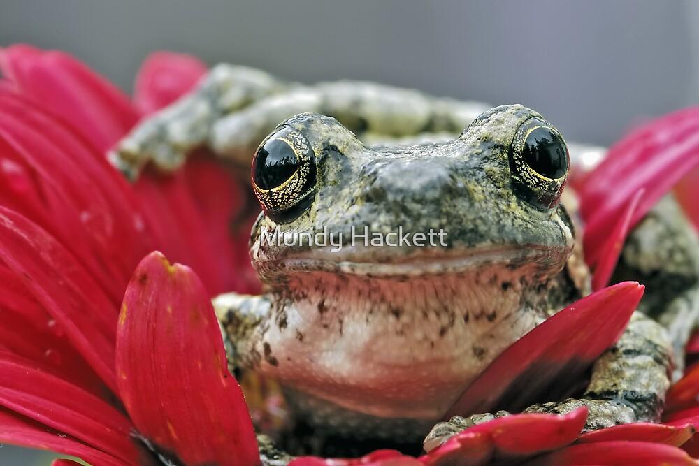 Gray treefrog by Mundy Hackett