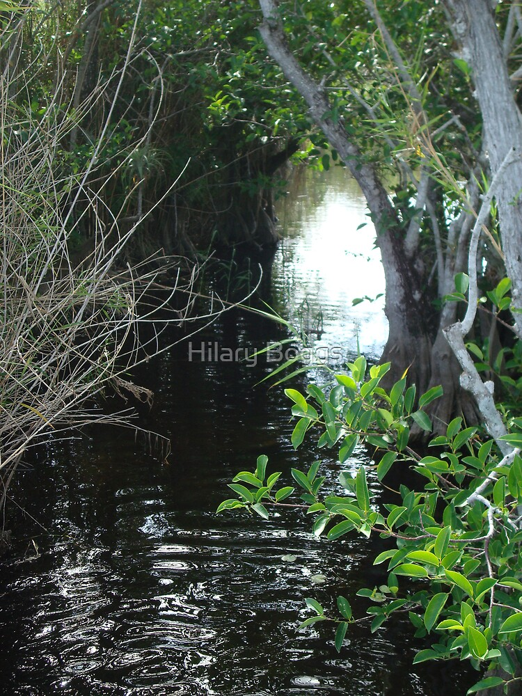 The Everglades by Hilary Boggs