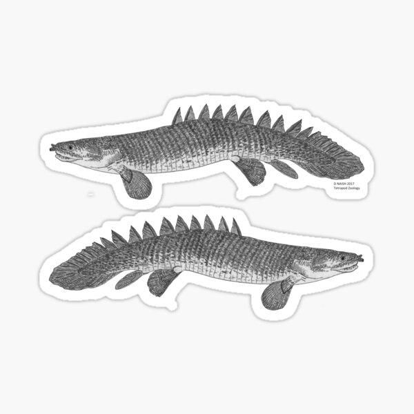 A bichir Sticker