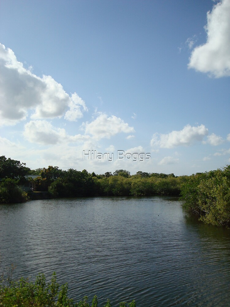 The Everglades again by Hilary Boggs