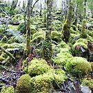 Green Wilderness by Judi Rustage