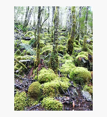 Green Wilderness Photographic Print