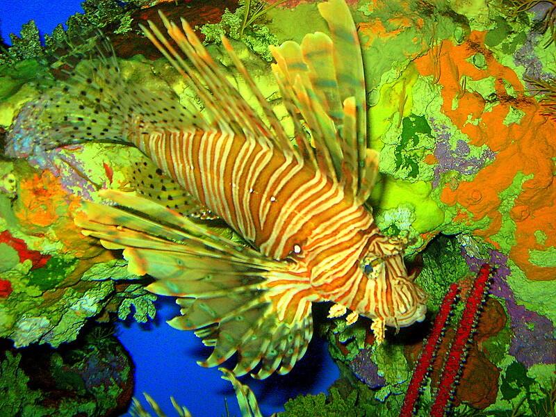 Lion Fish by Daniel Taylor