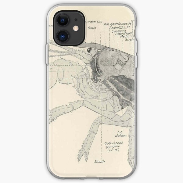 Vintage Lobster Anatomy Diagram (1911) iPhone Soft Case