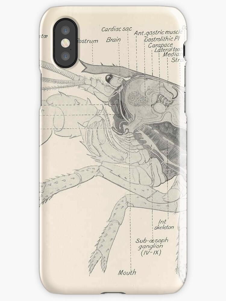 Modern Anatomy Of Lobster Sketch - Image of internal organs of human ...