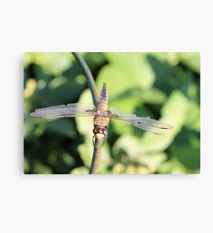 Damaged Dragonfly Canvas Print