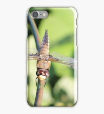 Damaged Dragonfly iPhone Case/Skin