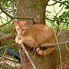 Kitten Sittin' in a Tree by Vivian Eagleson