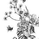 Pollinators 1 by Rachelle Dyer