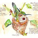 Phoebe, the Allen's Hummingbird - Botanical Illustration by Maree Clarkson