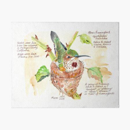 Phoebe, the Allen's Hummingbird - Botanical Illustration Art Board Print