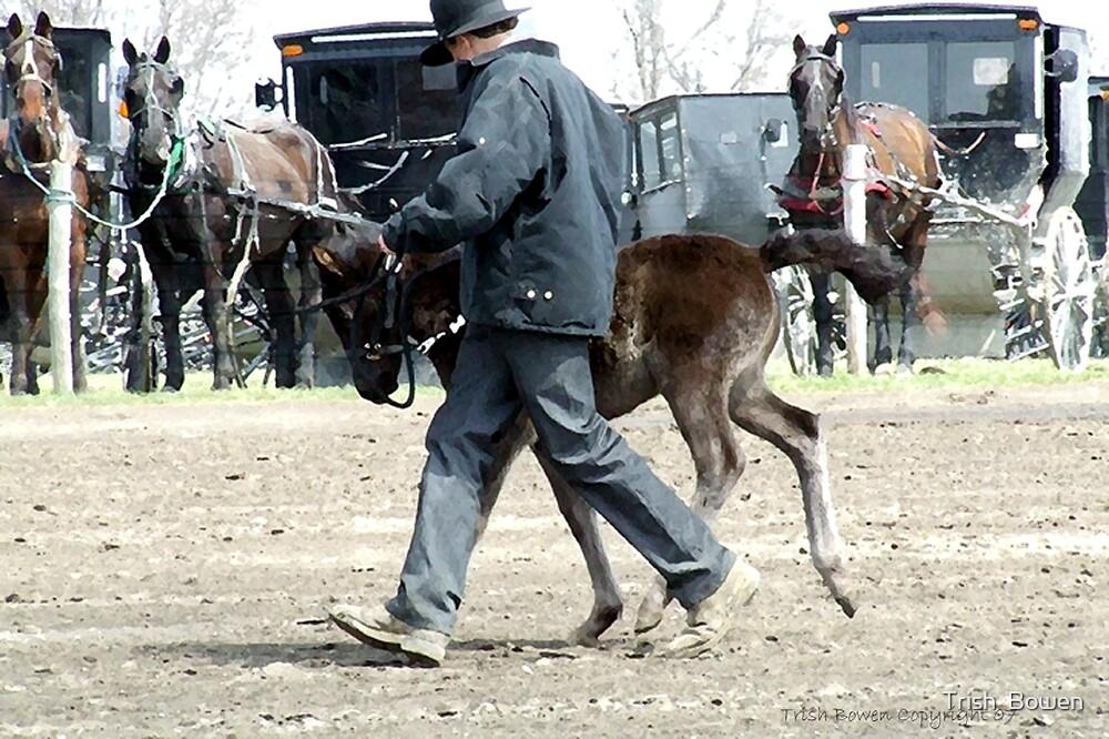 Amish Boy with Foal by Trish  Bowen