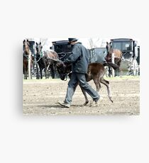 Amish Boy with Foal Canvas Print