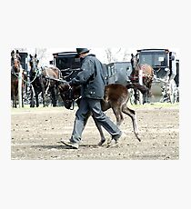 Amish Boy with Foal Photographic Print