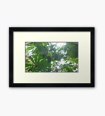 Rainforest Canopy Framed Print