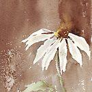 Sepia Daisy by Maree Clarkson