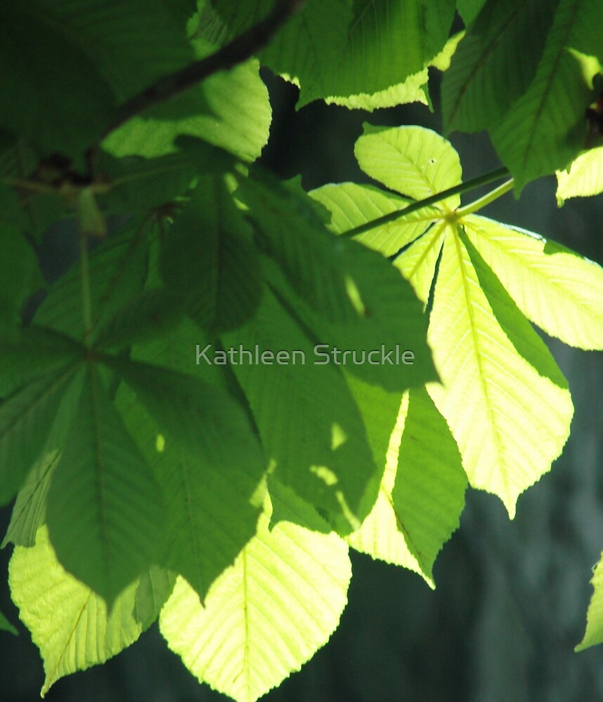 Leaves by Kathleen Struckle
