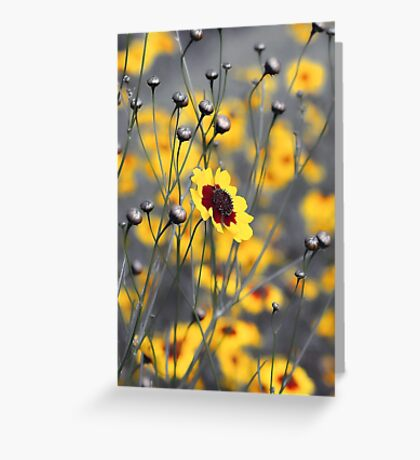 Silver & Gold -- Calliopsis (Coreopsis) Greeting Card