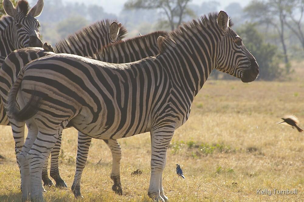 Zebra by Kelly Turnbull