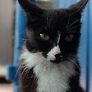 Black cat with white breast portrait by mrivserg