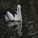 Pelican Reflections by Michael Rowley